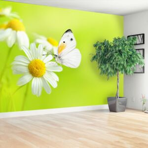 Wallpaper Butterfly and chamomile 104x70 cm
