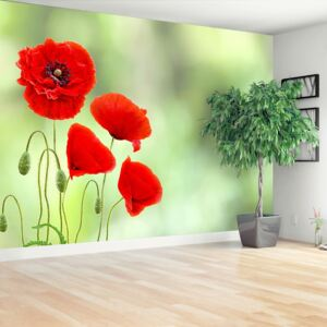 Wallpaper Red poppies 104x70 cm